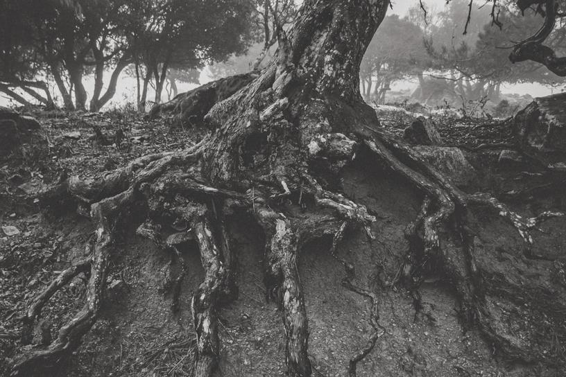 ikaria, Photography by George Tsimpidis lentil, Greece